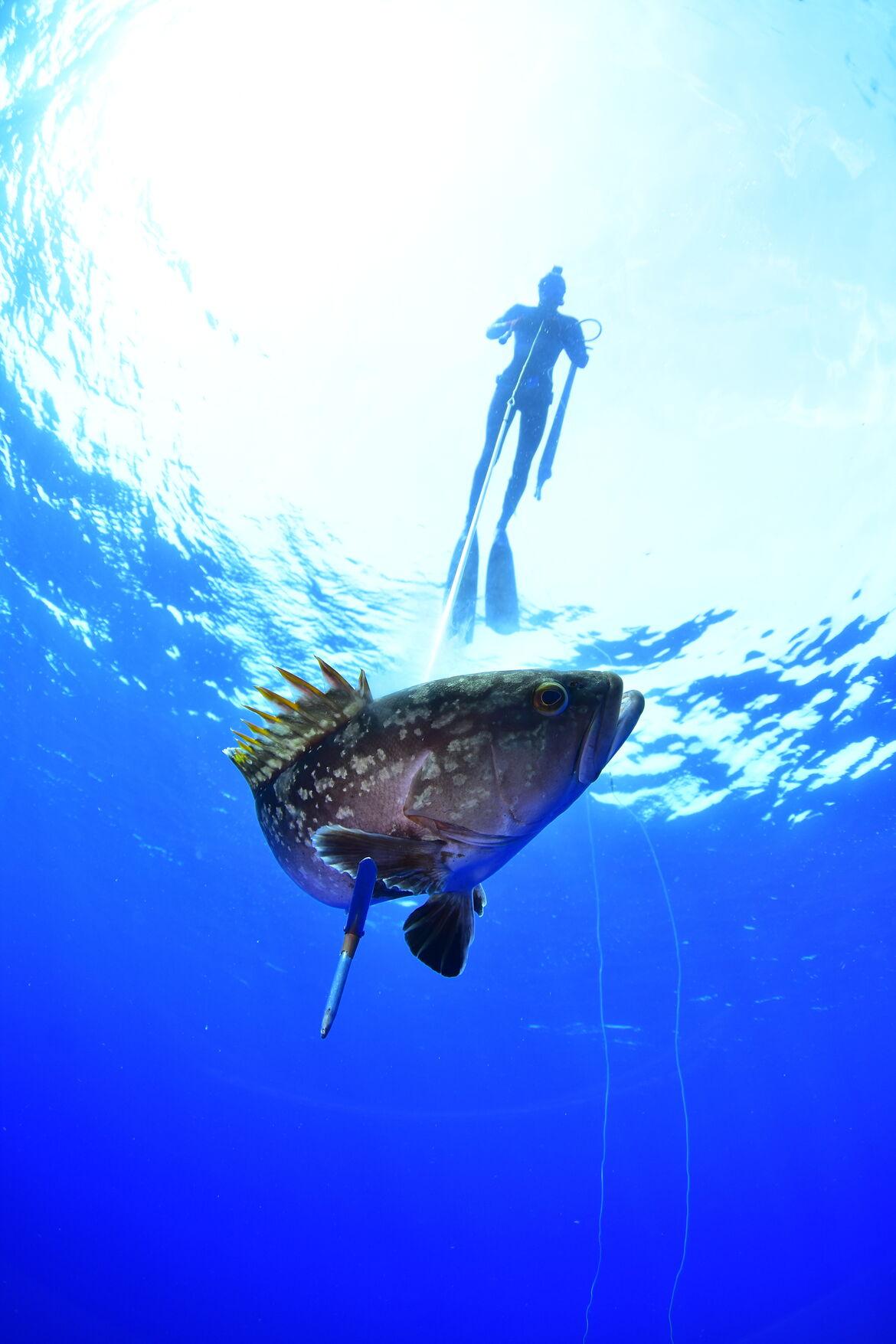 Mero capturado en aguas canarias